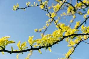 Nếu chúng ta đặt tên cho cây…