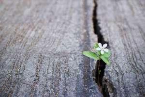 """""""Be resilient"""" - hãy kiên cường lên"""