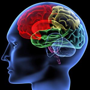 Hãy cho tôi thấy não bạn, tôi có thể biết bạn là người như thế nào!