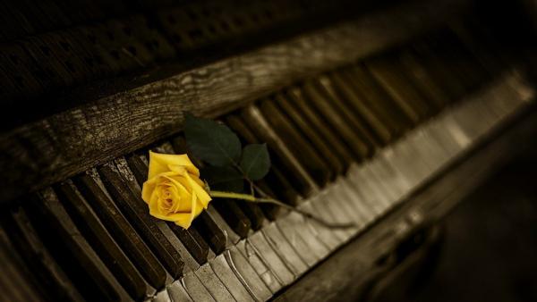 320 năm một tiếng dương cầm